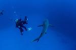 Carolyn Wang w shark 1-30-18-7051