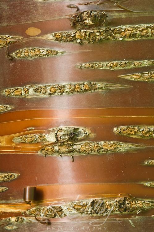 Canada, British Columbia, Victoria, Hatley Park, Birch Bark Cherry Trunk Detail