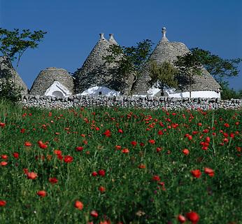 Italy, Puglia, Valle d'Itria near Alberobello: trulli and poppy flowers | Italien, Apulien, im Valle d'Itria bei Alberobello: Trulli