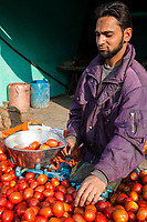 India, Dehradun.  Young Man Weighing Tomatoes in a Streetside Market.