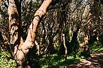 Image Ref: CA960<br /> Location: Bushrangers Bay Track<br /> Date of Shot: 28.09.19