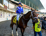 OZONE PARK, NY - NOVEMBER 26, 2016:Takaful #4 in the paddock for the Grade 2 Remsen Stakes for 2-year olds, at Aqueduct Racetrack . (Photo by Sue Kawczynski/Eclipse Sportswire/Getty Images)