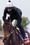 October 28, 2015:  Watsdachances (IRE), trained by Chad C. Brown and owned by Michael E. Kisber , Bradley Thoroughbreds & Nelson McMakin, exercises in preparation for the Breeders' Cup Filly & Mare Turf at Keeneland Race Track in Lexington, Kentucky on October 28, 2015. Jon Durr/ESW/CSM