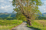 Hyatt Lane in Cades Cove, Great Smoky Mountains National Park, Tennesee, USA