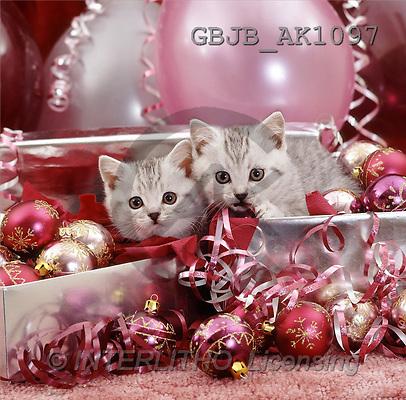 Kim, CHRISTMAS ANIMALS, photos, cat, balls(GBJBAK1097,#XA#) ,puzzles
