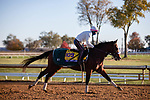 November 4, 2020: Tiz The Law, trained by trainer Barclay Tagg, exercises in preparation for the Breeders' Cup Classic at Keeneland Racetrack in Lexington, Kentucky on November 4, 2020. Gabriella Audi/Eclipse Sportswire/Breeder's Cup/CSM