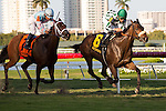 HALLANDALE BEACH, FL - FEBRUARY 25: #6 Morticia with Jose Lezcano up wins the Melody of Colors Stakes at Gulfstream Park, Hallandale Beach, FL. (Photo by Arron Haggart/Eclipse Sportswire/Getty Images)