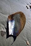 beach shells and sand in the surf Folly Beach South Carolina blue sky