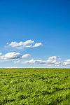 Deutschland, Bayern, Oberbayern, Chiemgau: Wiese und weiss-blauer Himmel | Germany, Upper Bavaria, Chiemgau, meadow and blue sky with wihite clouds