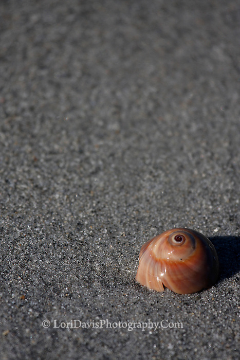 Shell On The Beach 5