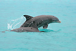 336 Dolphins & Whales of Abaco Island, Bahamas
