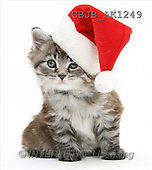 """CHRISTMAS  photos  OVERVIEW of  galleries -please insert artist name in """"advanced search"""""""