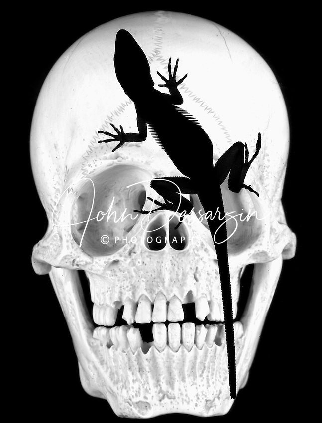 Ivory Skull & Lizard