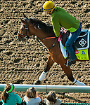 April 29, 2015: Keen Ice, trained by Dale Romans, exercises in preparation for the 141st Kentucky Derby at Churchill Downs in Louisville, Kentucky. John Voorhees/CSM