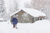 Man walks by log cabin during heavy falling snow, in Wiseman, Alaska, Arctic.