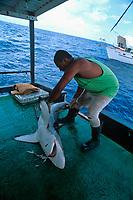 Cutting fins from Oceanic Blacktip Shark, Carcharhinus limbatus, . Cocos Island, Costa Rica - Pacific Ocean