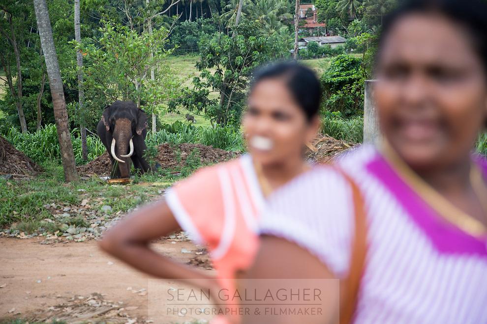 Tourists visit the Pinnawala Elephant Orphanage in Sri Lanka.