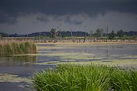 Feuchtgebiet, Sumpf, Überschwemmungsfläche, Feuchtbiotop, Wasserfläche, Tümpel, flood area, wetlands, wetland. Aufkommendes Unwetter, Gewitter, Gewitterfront. Deutschland, Mecklenburg-Vorpommern, Peene, Anklam