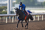 SHA TIN,HONG KONG-DECEMBER 09: Lovely Day,trained by Yasutoshi Ikee,exercises in preparation for the Hong Kong Cup at Sha Tin Racecourse on December 9,2016 in Sha Tin,New Territories,Hong Kong (Photo by Kaz Ishida/Eclipse Sportswire/Getty Images)