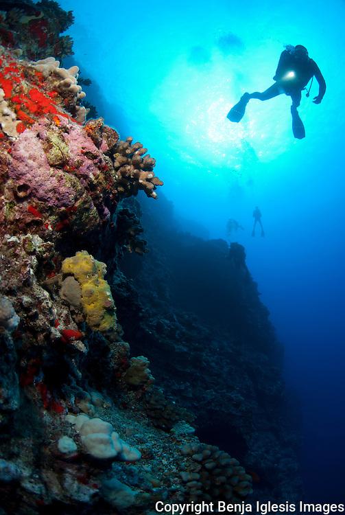 Diver at back wall molokini pointing his light torch a sponge crab.Maui Hawaii.