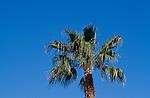 Aya Napa, Agia Napa, Palm-Tree, Cyprus, Zypern