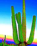 Saguaro #16