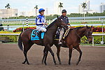 Summer Front on post parade before winning the Dania Beach Stakes for trainer Christophe Clement. Hallandale Beach Florida. December 18 2011