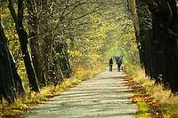 Avenham Park, Preston, Lancashire in autumn.