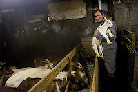 'Lulu', Lucian Blanc, producer of goats cheese, in his goat shed, Bonneval sur Arc, Savoie, France, 16 February 2012