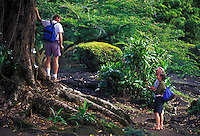 Hikers near large tree at Liliuokalani Park, Hilo, Hawaii