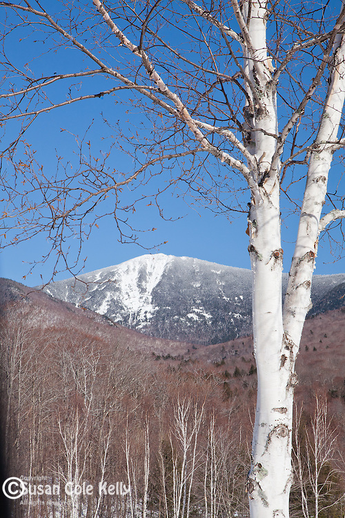 Flume Mountain in the White Mountain National Forest, NH, USA