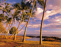 Palm trees and sunset. Launiupoko State Wayside, Hawaii.