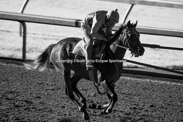 November 6, 2020: A horse gallops on the track before Future Stars Friday racing begins at Keeneland Racetrack in Lexington, Kentucky, on Friday, November 6, 2020. Scott Serio/Eclipse Sportswire/Breeders Cup/CSM