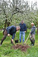 Apfelbaum pflanzen, Großvater, Vater und Junge (3 Generationen) pflanzen einen Obstbaum, Baum im Garten, Streuobstwiese, Kultur-Apfel, Apfel, Obstplantage, Obstanbau, Obst, während der Blüte, Apfelbaumblüte, Malus domestica, Apple, Pommier commun