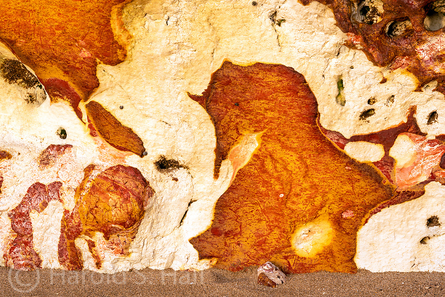 And the horse looked back at the rider it had just bucked off.<br /> Abstract designs found on a beach in Darwin, Australia.