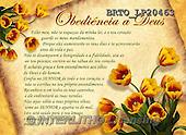 Alfredo, FLOWERS, BLUMEN, FLORES, paintings+++++,BRTOLP20463,#F# ,parchements,