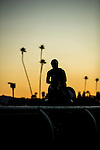 ARCADIA, CA - NOV 03: Horses exercise on the track during morning workouts at Santa Anita Park on November 3, 2016 in Arcadia, California. (Photo by Doug Engle/Eclipse Sportswire/Breeders Cup)