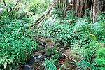 Stream Akaka State Park, Hawaii