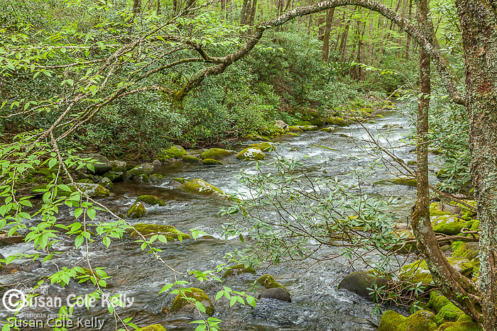 The Oconaluftee River, Great Smoky Mountains National Park, North Carolina, USA