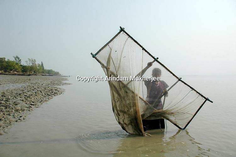 Swapna catches prawn seeds in a river at Sunderbans, West Bengal, India. Arindam Mukherjee