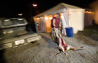 A deer is dragged into a storage tent before going to slaughter.<br />