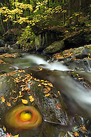 Autumn color along Hancock Brook, Worcester, VT