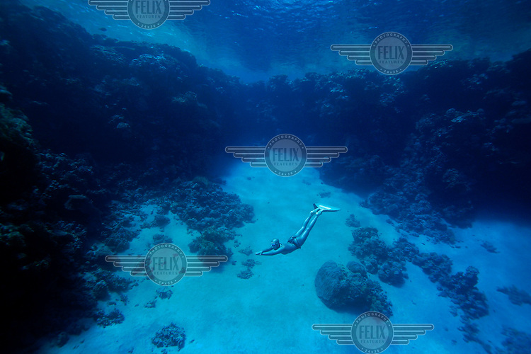 Elisabeth Kristoffersen from Norway freediving in the waters of Ras Mohammed national park in Sinai, Egypt.