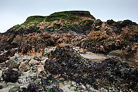 An extreme low tide reveals the seaweed and boulders at this large rocky outcrop at Pescadero State Beach.