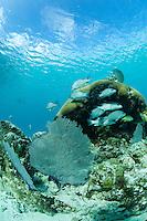 Fish on the reef at the Trunk Bay Underwater Snorkel Trail.St John, US Virgin Islands.Virgin Islands National Park