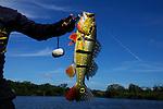 Amazon Peacock Bass