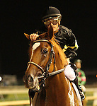 June 13, 2015 Island Town (Julien Leparoux) wins the 18th running of the G3 Matt Winn Stakes at Churchill Downs.  Owner Six Column Stalbes (Brad Stephens), trainer Ian R. Wilkes. ©Mary M. Meek/ESW/CSM
