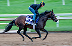 October 30, 2020: True Timber, trained by trainer Jack Sisterson, exercises in preparation for the Breeders' Cup Dirt Mile at Keeneland Racetrack in Lexington, Kentucky on October 30, 2020. Scott Serio/Eclipse Sportswire/Breeders Cup/CSM