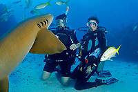 Two woman divers watch a Nurse shark, Ginglymostoma cirratum, approach very close on a dive off Ambergris Caye, Belize, Caribbean Sea.