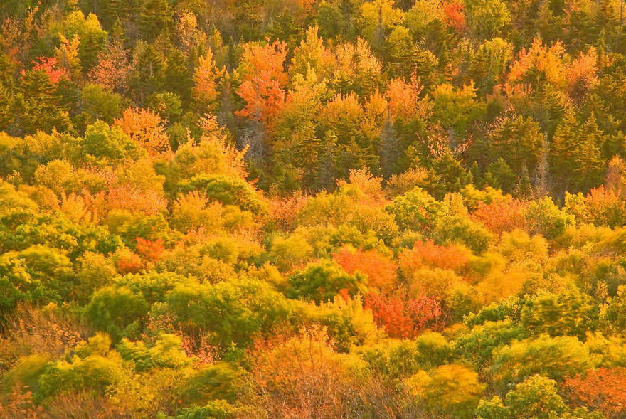 Autumn breeze transforms the forest to a painting.